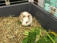 Lovely baby rabbit
