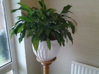 Large White Jardiniere - Plant Pot - As NEW !
