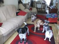 DOGGY DAYCARE DOG HOME BOARDING OVER 30 YEARS EXPERIENCE