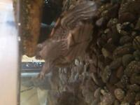 Two Mississippi map turtles