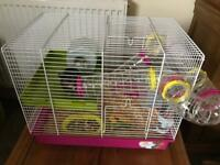 Young Syrian hamster with cage and accessories