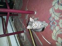 free kittens / chatons a donnee