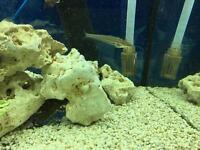 Catfish Tropical Fish