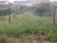 Garden maintance