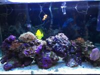 Marine reef tank complete setup including fish and corals. Includes stand.