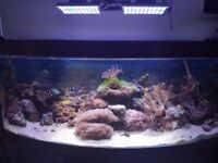 Quick sale 450L Juwel Marine Fish tank corals anemone (worth £2500)