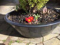 Shallow Wide Garden Pots x2 Dark Pewter/Black