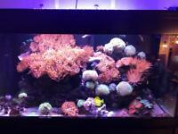 Anemone Marine Fish Corals Aquarium