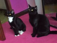 Male and female cat for rehoming