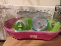 2 roborovski hamsters plus cage and accessories