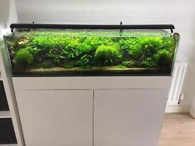 Stunning 120cm tropical planted aquarium with live stock worth over £1000