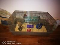 FREE 7 month old Syrian hamster with cage and accessories