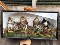 Vintage Stuffed / Taxidermy Owl - Taxidermy - Hawk - Taxidermy Squirrel - Taxidermy Magpie