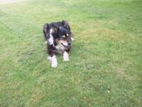 Pet sitting and dog walking, Home from Home Care: Melton Mowbray, Leicestershire area