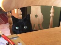 Lost black cat - please check sheds