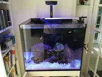 Well maintained Marine tank and livestock for sale