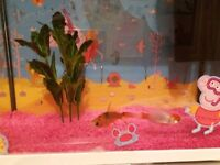 2 gold fish and tank with accessories