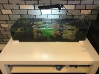 Turtle tank/terrarium (turtles not included) and accessories/equipment for sale