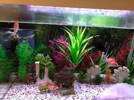 5 fancy goldfish need new Home and small catfish