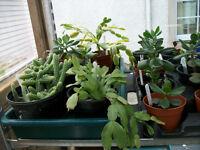 Indoor Plants 50p - £5