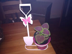 Pink Butterfly Welcome Planter w/ Coleus/Begonia