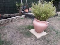 large garden pot and plant