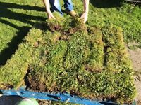 TURF free : Inverness area free to pick up