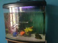 Fish tank, fish, and accessories