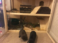 4 months Male and Female Rabbits