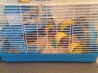 # Mini hamster