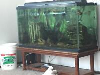 80 gallon tank with fish and accessories