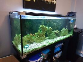 4 ft Aqua One Fish tank set up & stand