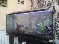Aqua one 3 foot fish tank