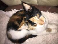 Female kitten