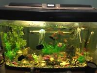 Fish tank for sale, tank, fish and all accessories