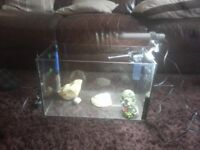 ffor sale glass Aquarium with light /pump /heater etc £20