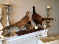 Pheasants on plaque