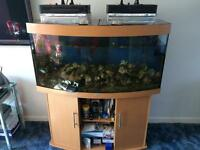 Jewul bow front fish tank And Stand
