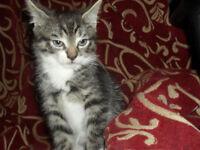 Kitten Looking For Loving Home