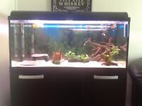 4month old tank+stand+filters+everything.offers considered....BARGAI...