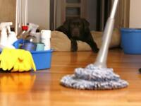 House cleaner home help
