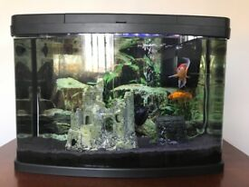 FOR SALE: 2 Gold Fishes and the Aquarium (Love Fish Panorama 64 litre £150RRP)