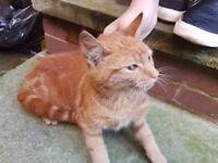 Ginger Kitty.