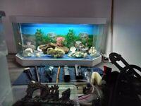 Large aquarium for sale
