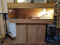 Female Corn Snake + 4ft wooden tank & stand.