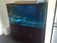4ft fishtank full set up