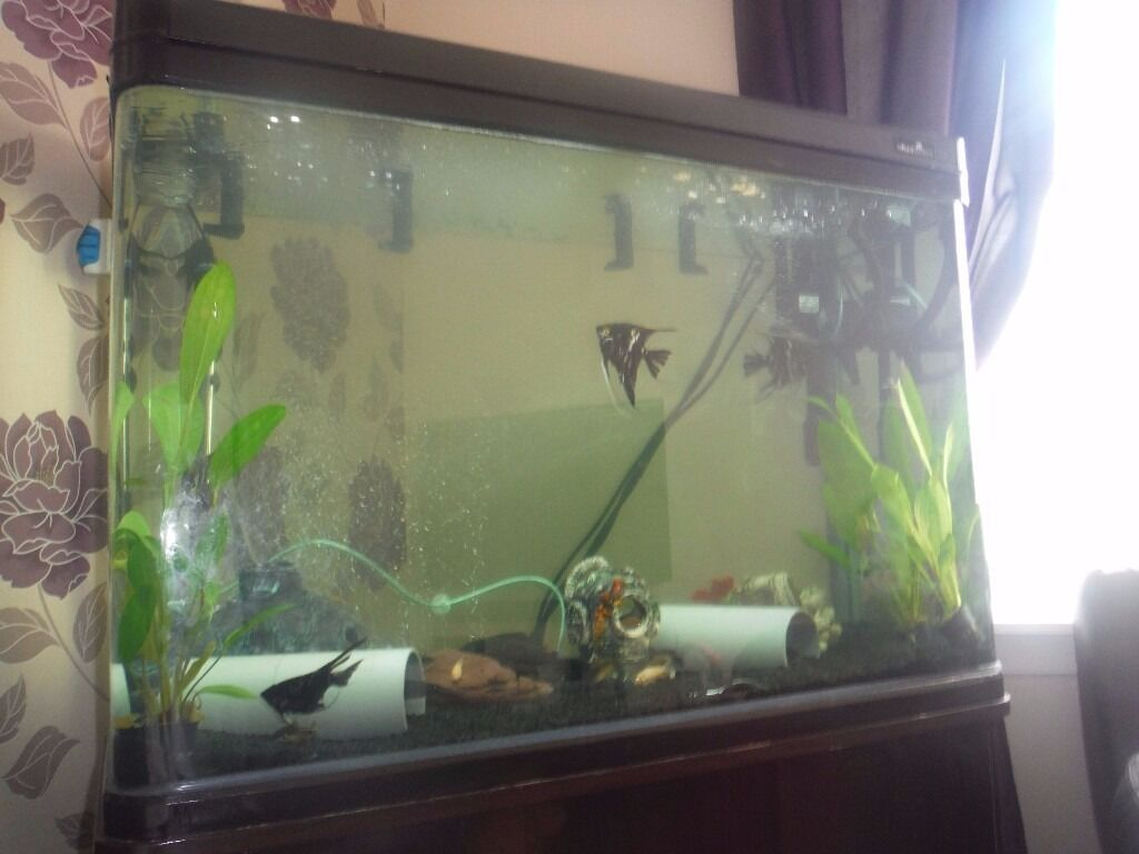 250 litre fish tank in aberdeen gumtree. Black Bedroom Furniture Sets. Home Design Ideas