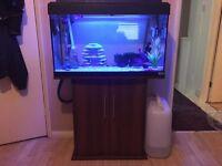 Fluval Roma 125 aquarium with cabinet | fish tank