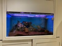 Fish tank set up complete