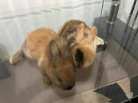 pair of brown baby rabbits